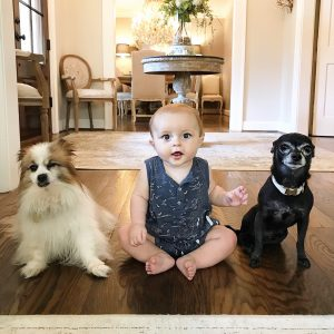 Infant boy and his two puppy friends